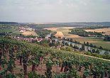 Vignes au printemps - Charly sur Marne